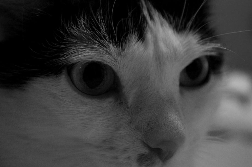 Bimbo och hennes blick.