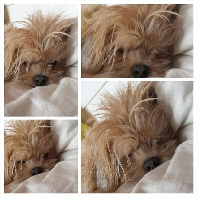 Min älskade sömntuta - Totte =)