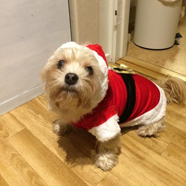 Totte som Jultomte =)