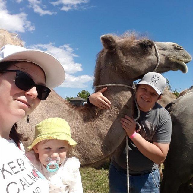Kamelen Schejken.
